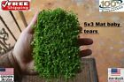 5x3 mat dwarf baby tears carpet wall Easy Aquarium aquascaping planted tank