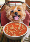 Dog Get Well Soup Funny Get Well Card Greeting Card by Avanti Press