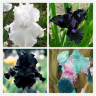 50 pcs/bag iris flower, iris seeds rare bonsai Phalaenopsis Orchid flower seed