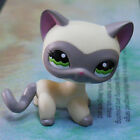 LPS COLLECTION Figure 1116 GREY MASK YELLOW CAT KITTY 2 LITTLEST PET SHOP