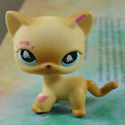 LPS COLLECTION Action Figure 816 Muddy Brown CAT KITTY TOY 2 LITTLEST PET SHOP
