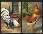 2 x Rooster breed DARK BRAHMA +  RHODE ISLAND RED cock. Set of 2 old postcards