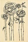 Flower Fields P116 Ranunculus STAMPENDOUS RUBBER STAMPS w m Free Shipping NEW
