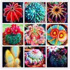 50PCS Rare Iris Mix Bonsai Seed Tree Flower Plants Decor Home Garden