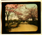 CHERRY BLOSSOMS JAPAN RICKSHAW HAND COLORED PHOTO ON GLASS