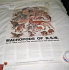 Rare Poster Australia National Parks & Wildlife Services Macropods of NSW 21/35""