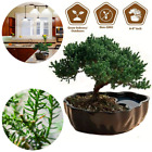 Zen Juniper Bonsai Tree Real Live Plant For Decor Garden Indoor Desk Office Gift