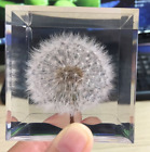 Dandelion Paperweight Cube A Real Dandelion Puff 225 x 225 x 225 Hand made