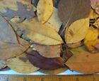 200 Pressed Fall Real Leaves Reds Golds  Browns 25 6 in long Table Scatter