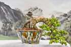 From Wigerts Private Collection Top Quality DWARF JADE CASCADE Bonsai