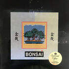 Bonsai Tree Starter Kit Japanese Black Pine Seed New