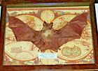REAL bat FRAMED BUTTERFLY MOUNTED SHADOWBOX lot ART GIFT INSECT taxidermy