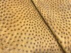 Ostrich Leather Hide Rio Umber color 100 Natural Skin