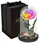 Preserved Eternal Real Rose Gift for Christmas Birthday Anniversary Valentines