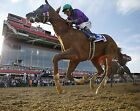 CALIFORNIA CHROME 2014 PREAKNESS STAKES WINNER HORSE RACE RACING 8X10 PHOTO 3