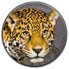 Leopard The African Big Five 1oz silver coin coloured 2013 Cameroon 1000 Francs