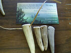 30 SMALL Elk Deer Antler Tips Tines Native Jewelry Crafts Pre Drilled 15 25
