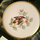 8 Collector Plates: Handpainted Birds from Audubon Drawings, Bavaria Germany