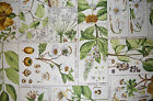 Bloomcraft Screenprint  2.75 Yards Botany Seeds Plants P-476 Upholstery Fabric