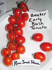 Baxter Early Bush Tomato Seeds!   Comb. S/H See our store!