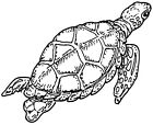 Unmounted Rubber Stamps Sea Turtles Endangered Species Nature Sea Turtle