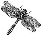 Unmounted Rubber Stamps Dragonflies Insects Dragonfly Stamp Nature Stamping