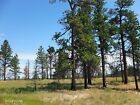 20 ACRES MUSSELSHELL COUNTY MONTANA TREES VIEWS CASH SALE NO RESERVE