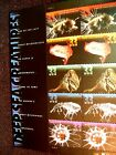 3439 43 DEEP SEA CREATURES 2000 NATURE PANE OF 15 33 CENT STAMPS CV 2200