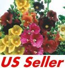 150 Seeds Hollyhock Super Single Mix B110 Colorful Flowers Seeds