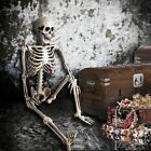 5ft Halloween Human Body Skeleton Props Movable Joints Haunted House Decoration