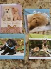 Lot Of Dog Cards Birthday Think Of You Get Well Blank New