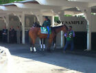 BEHOLDER 8 by 10 PHOTO 2014 Ogden Phipps Horse Race BELMONT PARK Breeders Cup 1