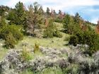 10 Acres of Cabin sites in the Wilds of SW Montana make an offer we r all ears