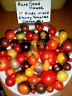 Exclusive Mix Of 37 Different Kinds Of Cherry Tomatoes! SEE LIST! 100 Seeds!