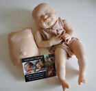 Serenity Reborn Baby Doll Kit Laura Lee Eagles LTD SOLD OUT BODY TUMMY PLATE COA