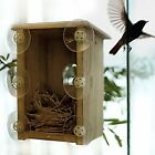 Clear Window Nest Birdhouse Wood Box Perch View Birds Hatching Coaxing Chicks