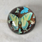Vintage Butterfly Glass Paperweight Round Hand Painted