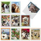 M2373OCB Animal Selfies 10 Assorted Blank All Occasion Note Cards Envelopes