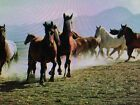 160 ACRES AWESOME HUGE PRIVATE WEST TEXAS RANCH  RESIDENTIAL  BUILDABLE