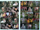Vintage American Greetings ANIMAL Photo Stickers 2 Sheets