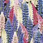 Fabric Texas Bluebonnets Wild Flowers Red White on Cotton by the 1 4 yard