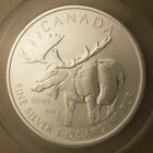 Canadian 2012 $5 ANACS MS 70 Canada Moose (BU UNCIRCULATED) .9999 Silver Coin