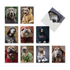 M3733OCB DOGS IN DA HOOD 10 Assorted Blank All Occasion Note Cards stationery