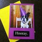 Funny Boston Terrier Birthday Card Hooray Puppy Card Cute Dog Lets pawty