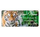 Bengal Tiger Address Labels Calm Beautiful Tiger In Water 60 Labels