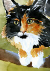 cat kitten calico Maine Coon art card original watercolor ACEO KV