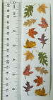 Mrs Grossman FALL LEAVES Strip Colorful Fall Leaves Scrapbook Cards Stickers