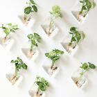10Pcs Wall Hanging Plant Terrarium Glass Planter Flower Vase Pot Diamond +Hooks