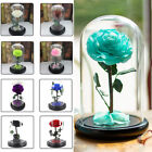 Preserved Rose Glass Dome Flower in Glass Forever Love Gifts for Wedding
