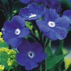30+ BLUE ANCHUSA PERENNIAL FLOWER SEEDS DEER RABBIT RESISTANT DROUGHT TOLERANT